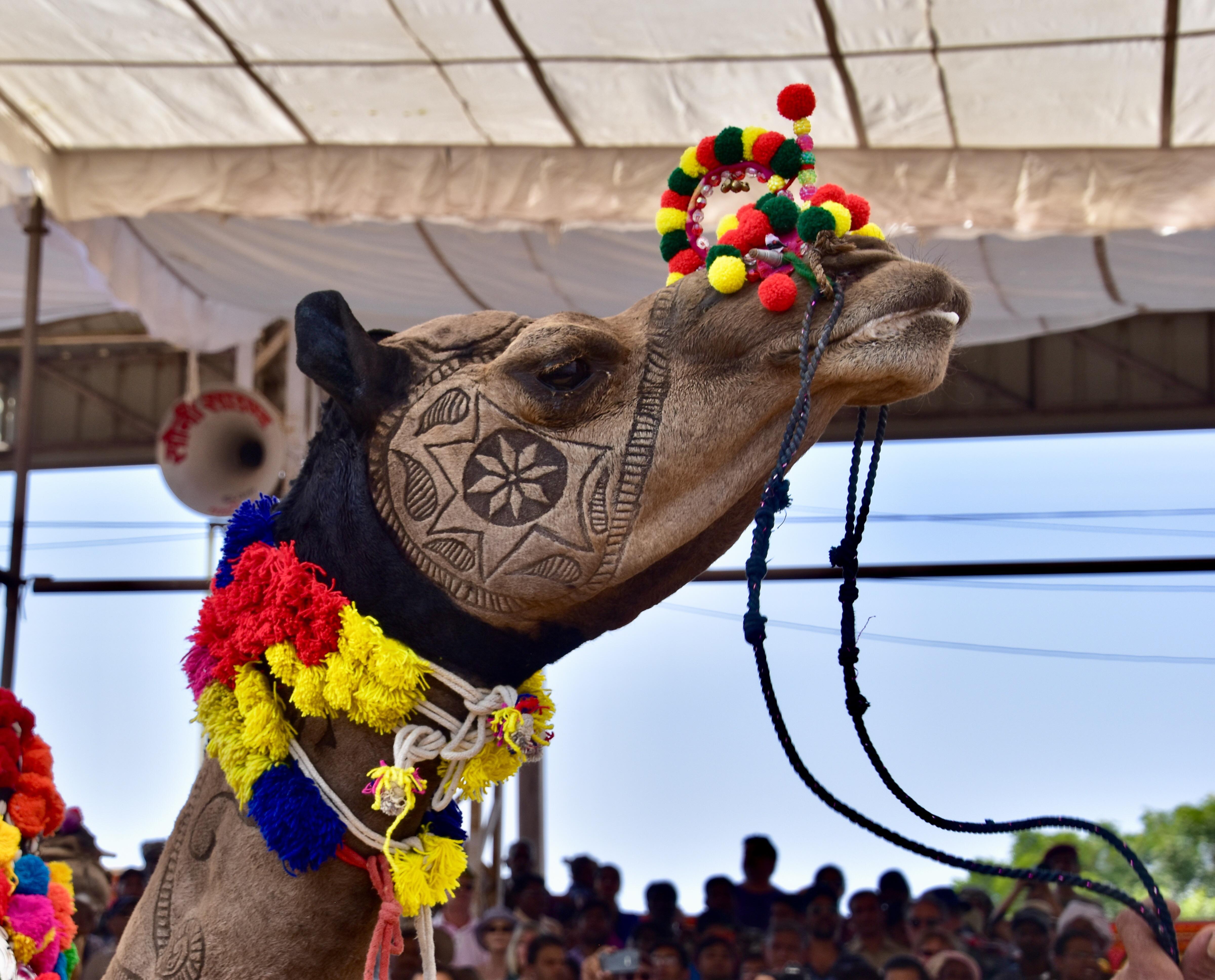 Camel Mc Camelface
